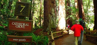 Muir Woods National Monument Limo Rentals Napa