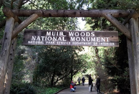 Muir Woods National Monument Limo Service Napa